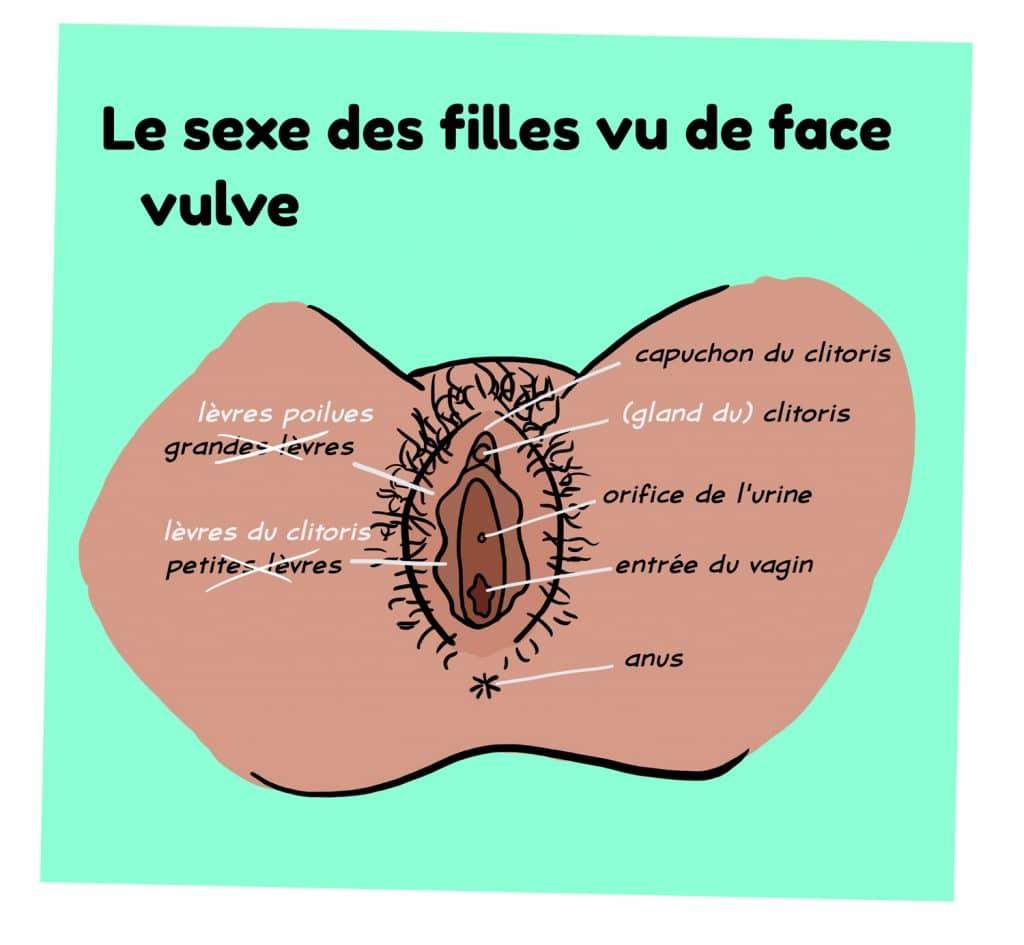 Schema du sexe feminin vu de face sur le site parlons-sexualites.fr